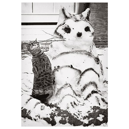 Cat and snow cat