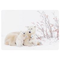 Ice bear family in the snow