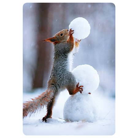 Squirrel building a snowman