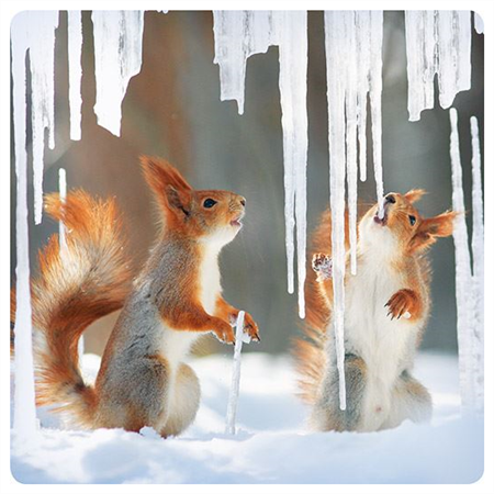 Squirrels and icicles (14x14cm)