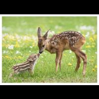 Wild boar and deer
