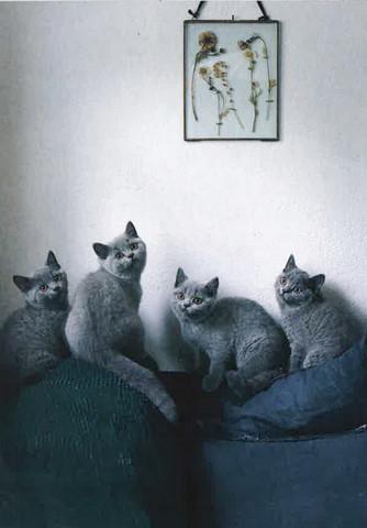 Gray cats #3