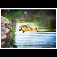 Bird's jump