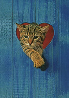 Cat in heart shape