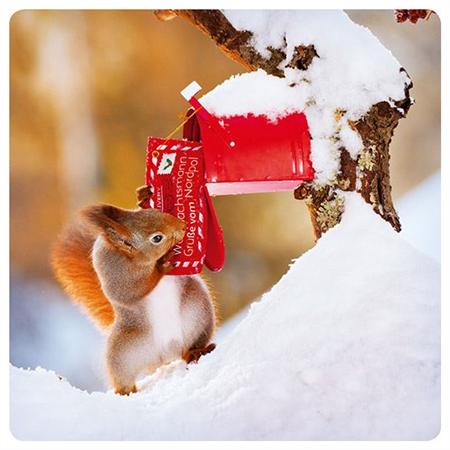 Squirrel with mailbox (14x14cm)