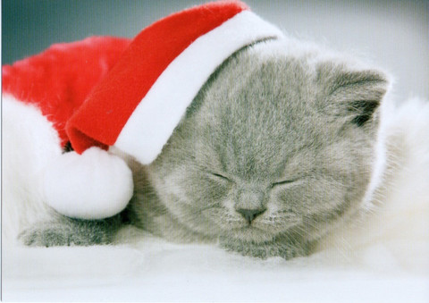 Christmassy cat #2