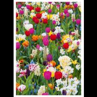 Värikkäät tulppaanit