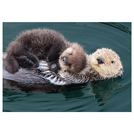 Otter mother and baby