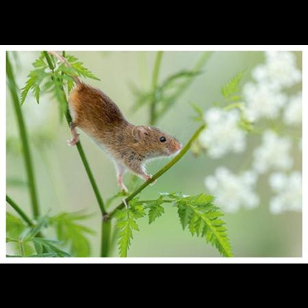 Balancing mouse