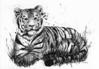 Wild animals - Tiger