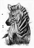 Wild animals - Zebra
