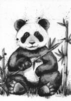 Villieläimet - Panda