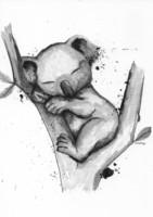 Villieläimet - Koala