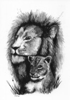 Wild animals - Lion
