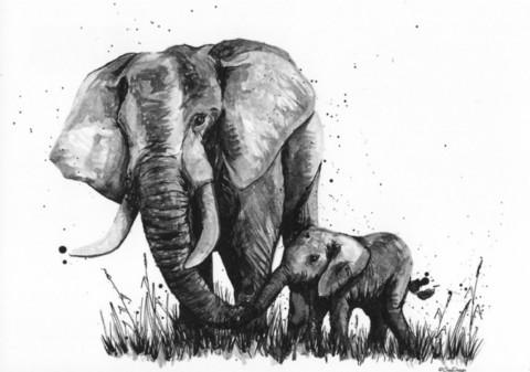 Wild animals - Elephant