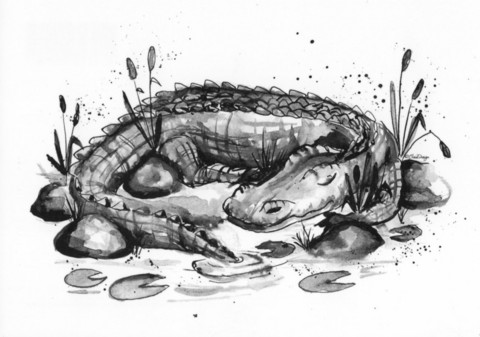 Villieläimet - Krokotiili