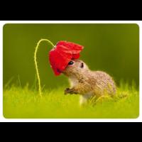 Orava ja kukka