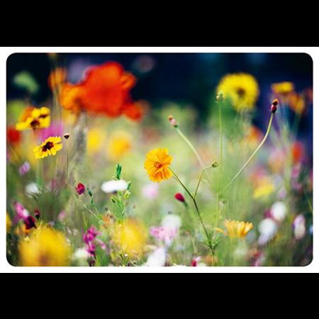 Kesäiset kukat
