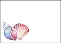 Seashell - envelope (C6) #1