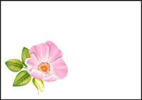 Rose - envelope (C6) #1