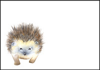 Hedgehog - envelope (C6) #1