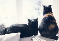 Kissat ikkunalla