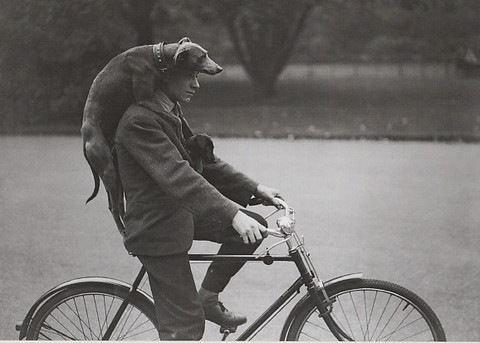 A man cycling with dogs
