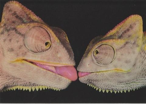 3D postcard - lizards