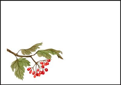 Syksyinen oksa - kirjekuori (C6) #1