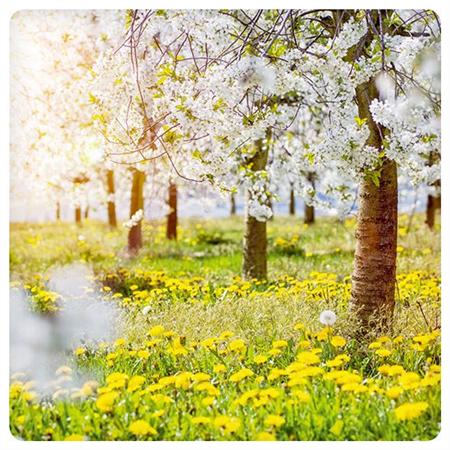 Spring bloom (14x14cm)