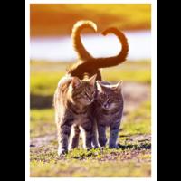 Kissarakkautta