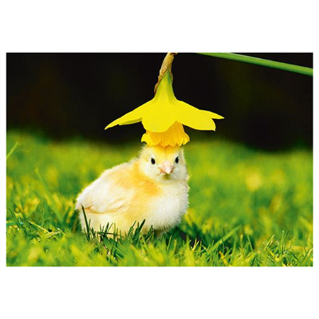 Flower hat chick