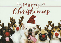 Merry Christmas - dogs