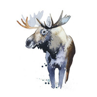 Moose - Ester Visual