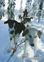 Sled dogs in the forest