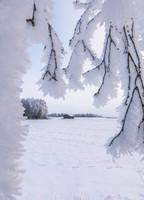 Suomi-Finland snow landscape #8