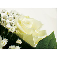 Kukkasarja #2