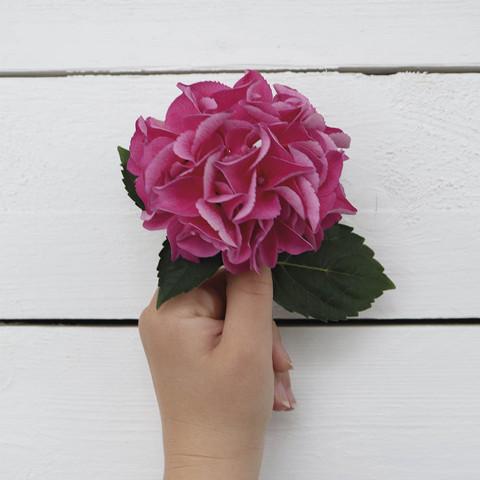 Pink Hydrangea (14x14cm)