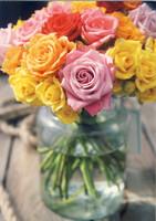 Nuppulan ruusut