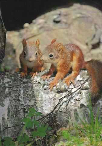Cute squirrel chicks