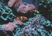 Vuokkokalat ja korallit