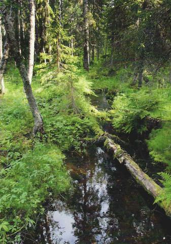 Puro metsän keskellä