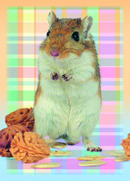 Cute rodent