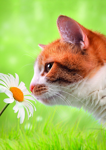 The cat sniffs the daisy