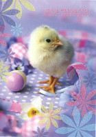 Happy Easter - chick
