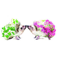 Flower hedgehogs
