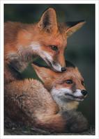 Konsta Punkka - Fox #1