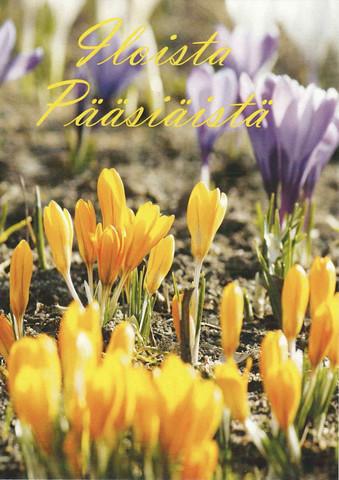Iloista pääsiäistä - krookukset