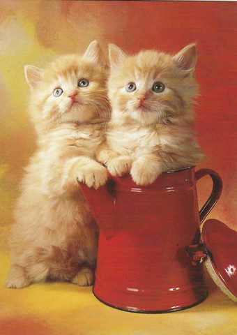 Kittens and red jug