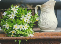 White anemones and jug